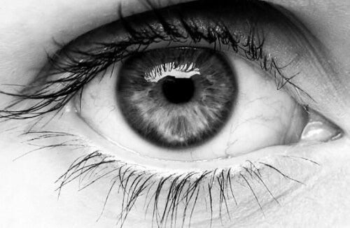 Oeil-humain-500x326