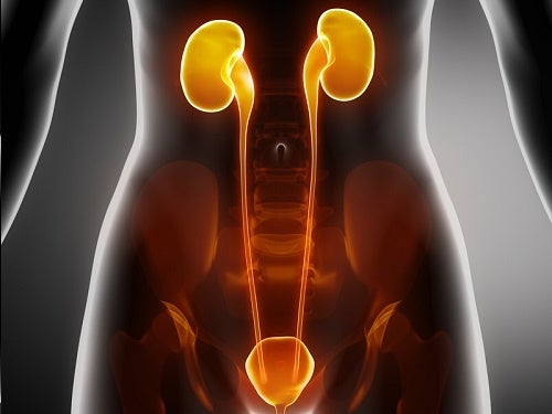 Un traitement contre les infections de la vessie, de l'urètre et des reins