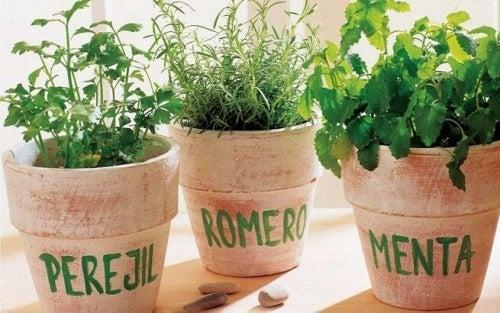 Comment planter du romarin, du persil et de la menthe à la maison