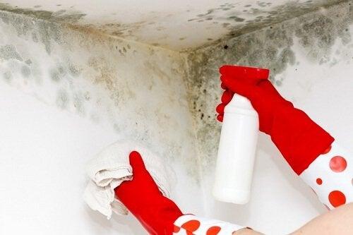 3 astuces maison pour éliminer la moisissure