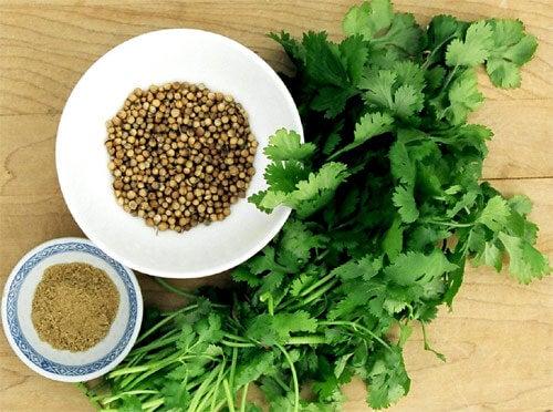 coriandre permis les aliments indispensables