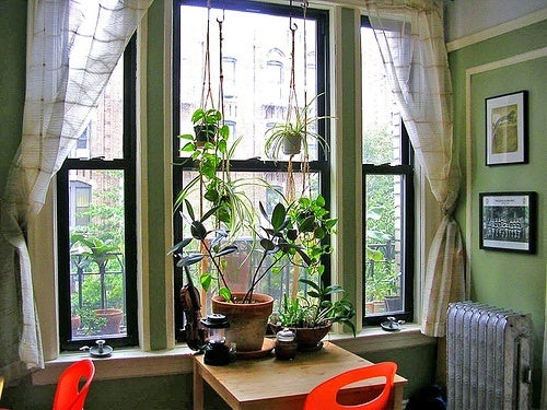 plante-rabi-w-500x375