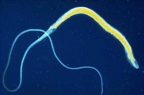 Les parasites sous la peau sur les poitrines