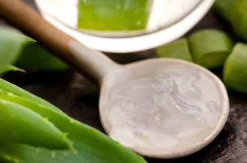 shampooings aux herbes avec de l'aloe vera