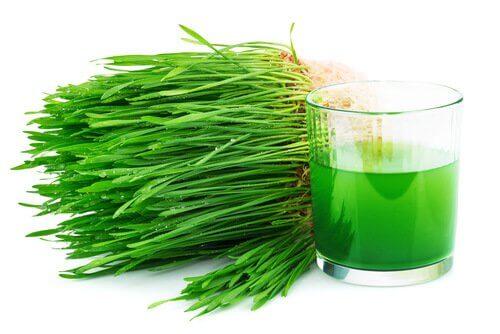Bienfaits-de-la-chlorophylle