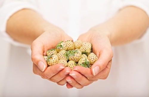 Caracteristiques-de-la-fraise-blanche-500x325
