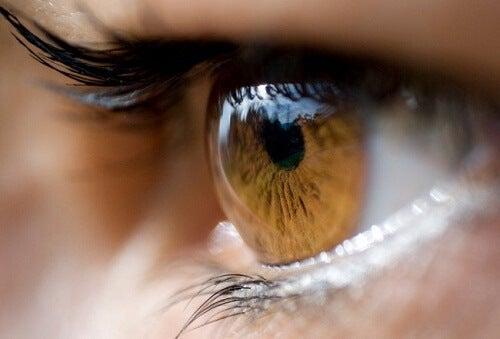 Couleur-d'yeux-500x339