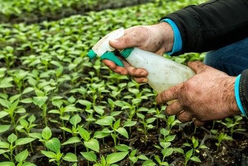 Pesticides-500x334