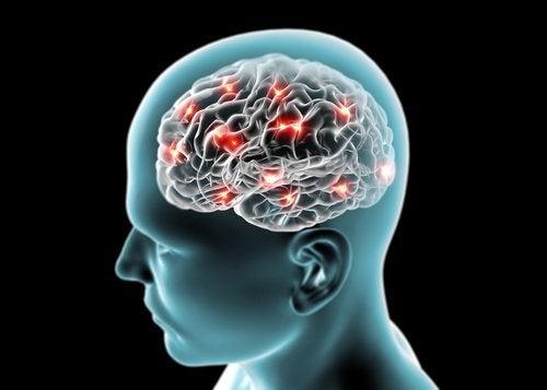 Les concombres pour le cerveau.