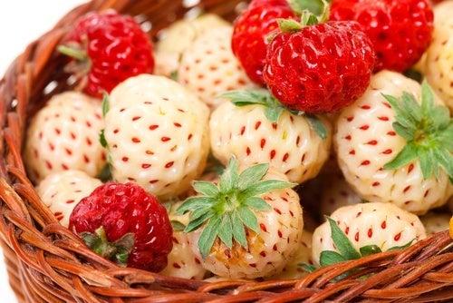 Les caractéristiques des fraises blanches