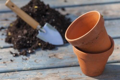 pot pour cultiver des tomates