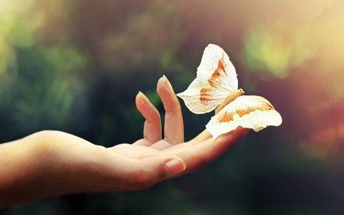main avec un papillon