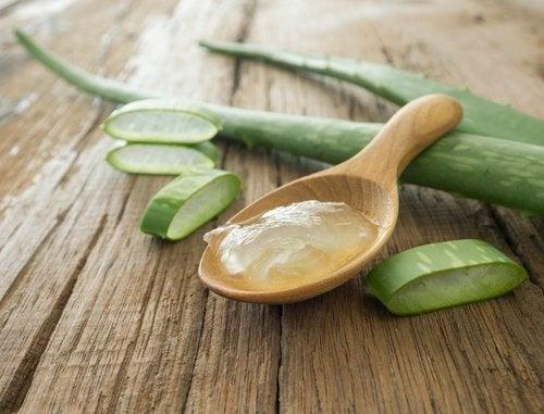 Aloe vera pour le soin de la peau.