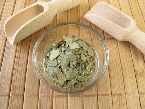 éliminer rapidement les poux et les lentes : feuilles d'eucalyptus