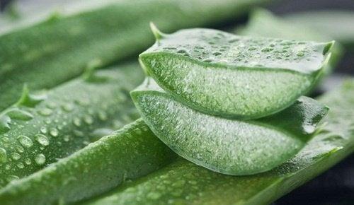 Aloe-vera-contre-les-hemorroides-500x290