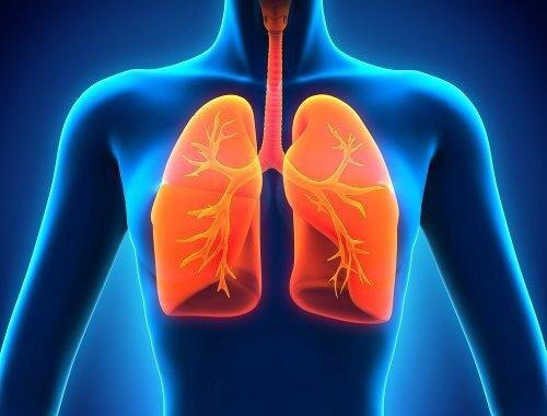Les 9 aliments que vous devez inclure dans votre régime alimentaire pour avoir des poumons en bonne santé