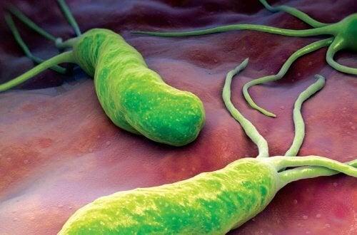 Bactérie H. Pylori : tout ce que vous devez savoir