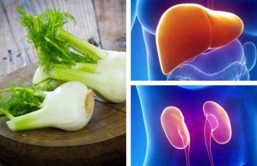 Le fenouil, un remède traditionnel pour soigner le foie et les reins
