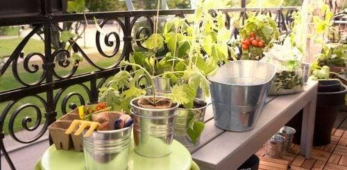 Les légumes pour le potager particulier