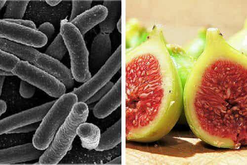 Eliminer les bactéries stomacales avec un traitement à base de figues