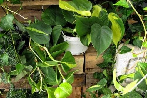 5 plantes d'intérieur qui pourraient être dangereuses