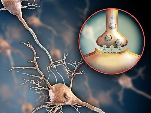 6 manières de prendre soin du système nerveux