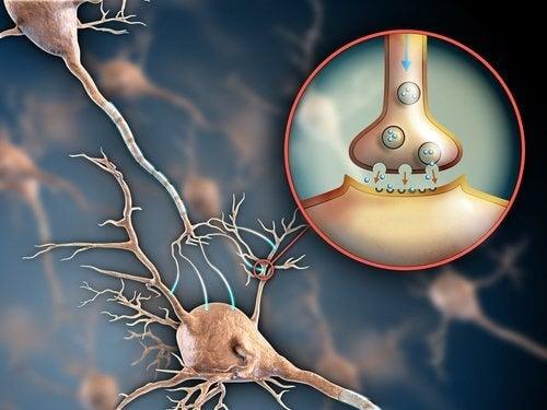 6 manières de garder votre système nerveux en bonne santé