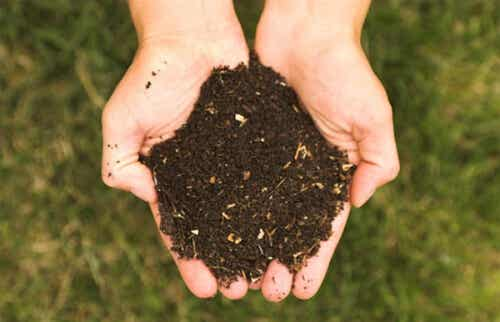 5 engrais écologiques pour nourrir vos plantes