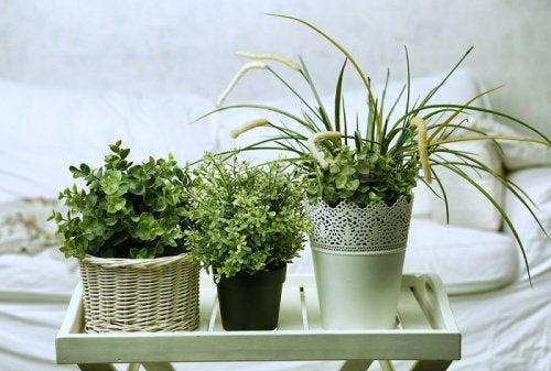 5 plantes mettre dans la chambre pour trouver le sommeil am liore ta sant. Black Bedroom Furniture Sets. Home Design Ideas