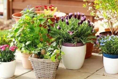 Plantes-foyer-500x333
