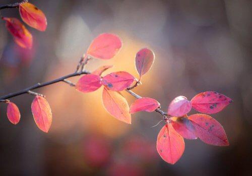 feuilles-rosees-representant-le-vide500x349