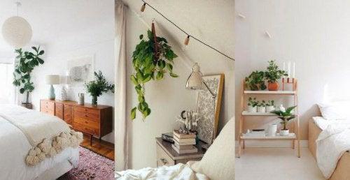 plantes-pour-trouver-le-sommeil-500x258
