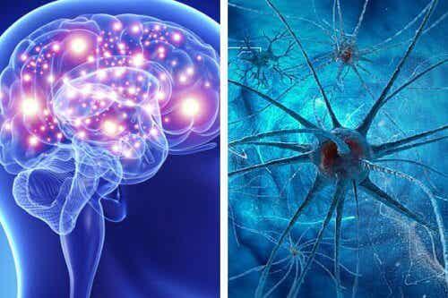 9 habitudes qui tuent les neurones et affectent la santé cérébrale