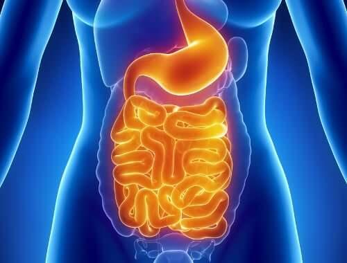 Santé du système digestif.