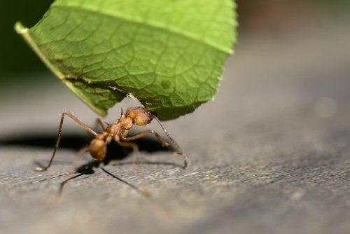 Eliminer-les-fourmis-500x334