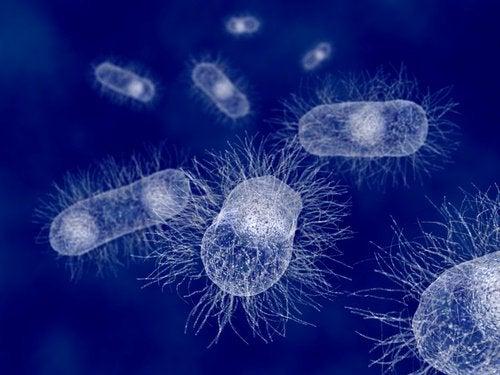 Effets de la surcharge bactérienne.