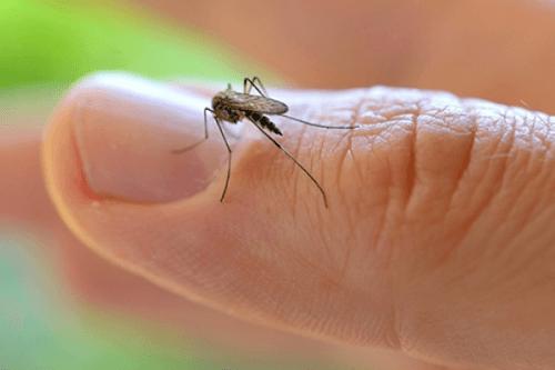 L'OMS déclare l'urgence sanitaire mondiale à cause du virus Zika