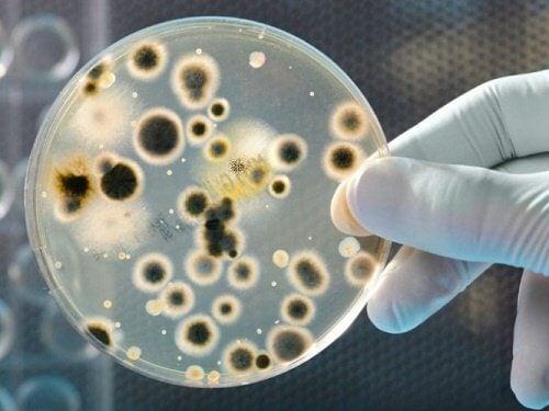 enlever ses chaussures : elles contiennent plus de bactéries que les toilettes