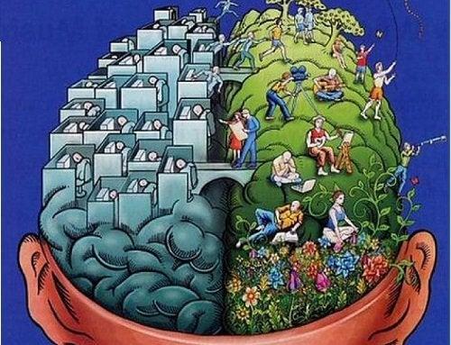 Les hémisphères sont des parties du cerveau.
