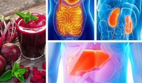Comment désintoxiquer chaque organe vital?