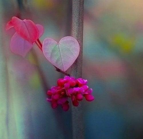 Fleurs-forme-de-coeur-beaute-d'exister