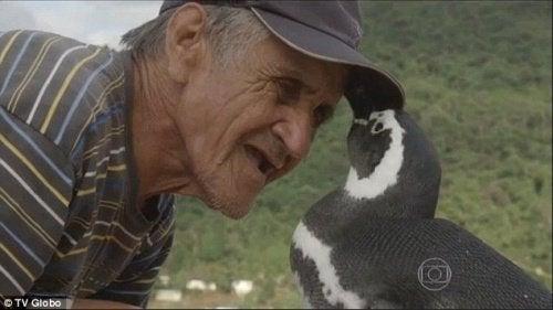 Pingouin-bresilien-500x281