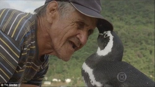 tendresse entre joao et le pingouin
