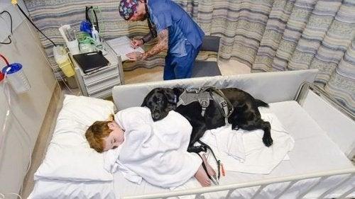 Mahe, le chien qui s'occupe de son ami autiste
