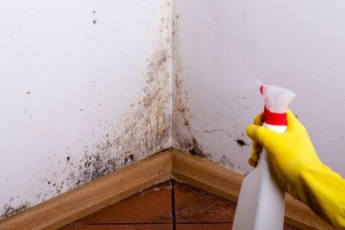 Comment enlever les moisissures des murs avec des astuces maison