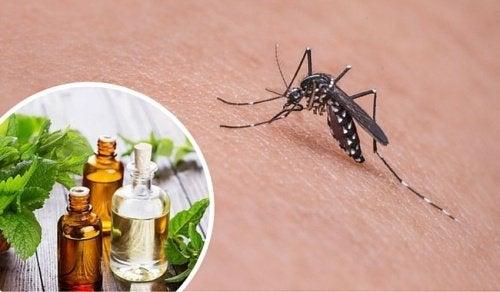Les 11 meilleures plantes pour repousser les moustiques