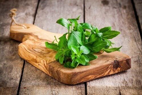 meilleures plantes pour repousser les moustiques : basilic