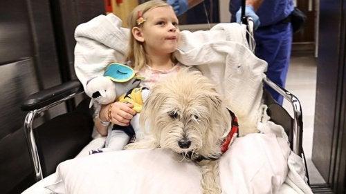 animaux domestique dans un hôpital