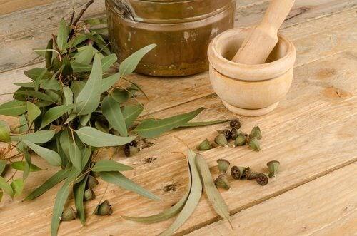 meilleures plantes pour repousser les moustiques : : eucalyptus