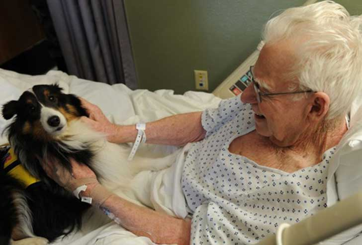Découvrez l'hôpital qui permet aux animaux domestiques de rendre visite à leurs maîtres